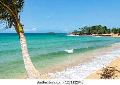 atlantic coast with palm trees tides and rocky shoreline outside arecibo puerto rico