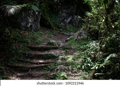 Atlantic Florest Trail Brazil
