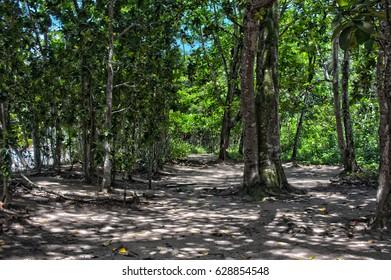 atlantic forest near Ubatuba