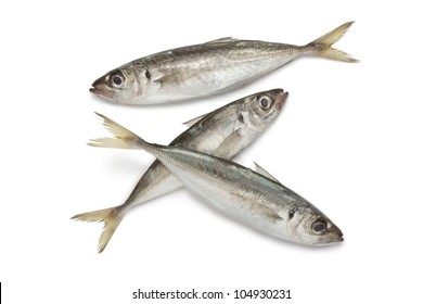 Atlantic horse mackerels on white background