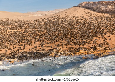 Atlantic ocean sea lion colony at the Namibian Skeleton coast.