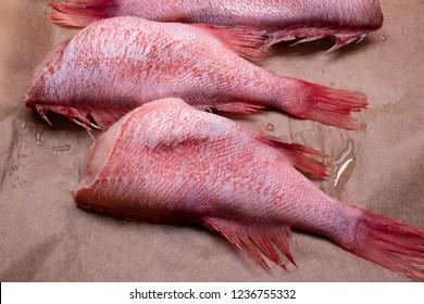 Atlantic redfish, Headless