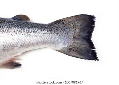 Atlantic salmon isolated on a white studio background.