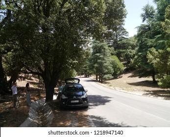Atlas, Morocco / Morocco - August 2016: Cedar trees in Atlas mountains