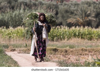 ATLAS MOUNTAIN, MOROCCO - OCTOBER 11: Unidentified woman carrying grass in Atlas Mountain on October 09, 2013 in Morocco. Only portion of population lives countryside.