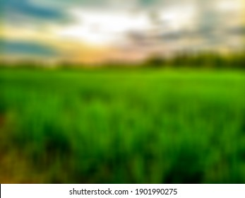 atmosphere around rice fields blur background with bokeh