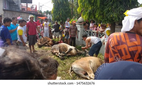 the atmosphere of slaughtering qurban cows. Padang, August 11, 2019