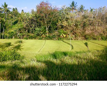 The Atmosphere Of Warm Sunshine In The Farm Lands At Ringdikit Village, North Bali, Indonesia