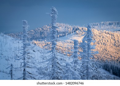 Atmosphere of winter mountains - frost and snow covered tree trunks with forest in the backgroun