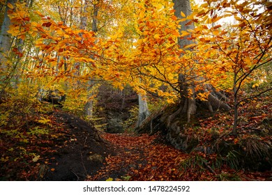 Atmospheric autumn colours in the beech-tree mixed forest