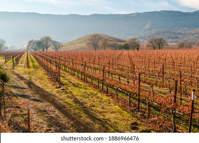 Atmospheric Autumn Napa Valley Vineyard