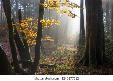 Atmospheric autumnal Black Forest with foliage