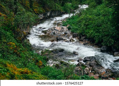 Atmospheric green forest landscape with mountain creek in rocky valley. Beautiful mystery taiga with wild river. Vivid scenery of forest freshness. Rich greenery on mossy rocks along mountain river.
