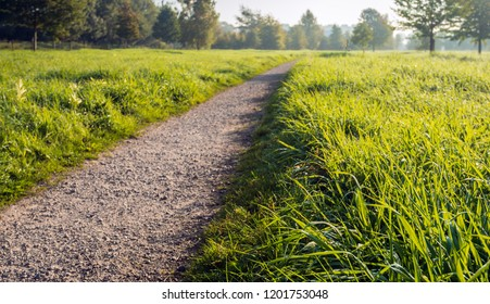 Atmospheric image of a seemingly endless path in a Dutch park. Next to the path is long fresh green grass with small dew droplets. It is still early in the morning of a sunny day in autumn season.