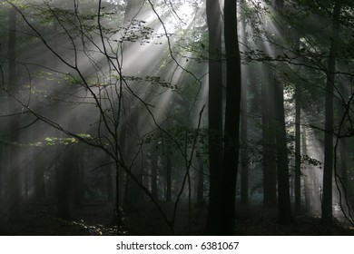 Atmospheric low light image of early morning sunlight bursting through the tree canopy to reach the forest floor. Taken on a misty morning.