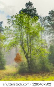 Atmospheric misty spring landscape in forest and tree with fresh young leaves and in background a hornbeam with old brown leaves