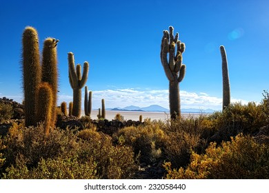 Atmospheric shot of a Incahuasi cactus hill at the Uyuni desert in Bolivia
