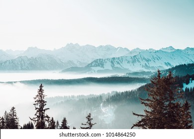 Atmospheric winter landscape with low lying mist in steep forested mountain valleys with snowy peaks and pine trees in the foreground