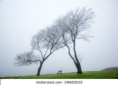 Atop Cleeve Hill in the Fog, England