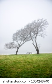 Atop of Cleeve Hill in the Fog, Gloucestershire England