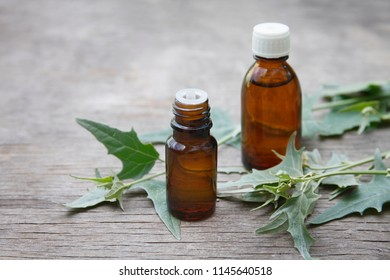 Atriplex extract (infusion, oil, remedy, tincture) glass bottles with fresh Atriplex leaves on wooden background