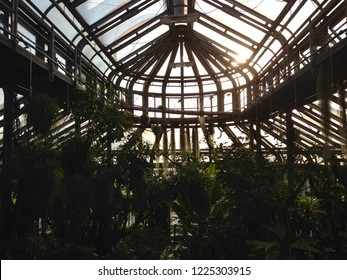Atrium filled with fauna in the Berlin Botanical Garden