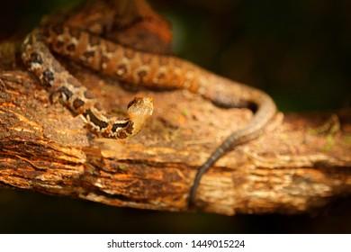 Venomous Reptile Images, Stock Photos & Vectors | Shutterstock