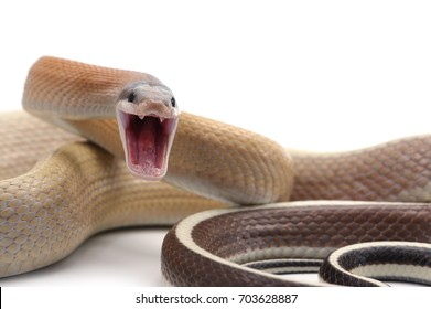 Snake Attack Images, Stock Photos & Vectors | Shutterstock