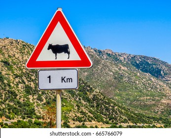 """""""Attention - cows"""" sign. In Sardinia, Italy"""