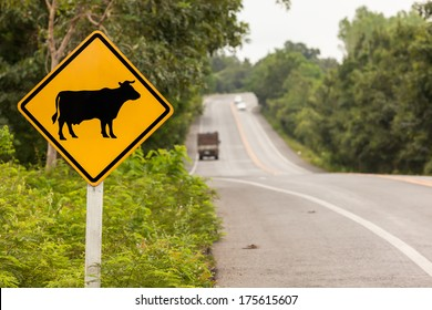 Attention crossing cows