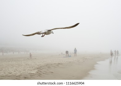 Attention, seagulls coming