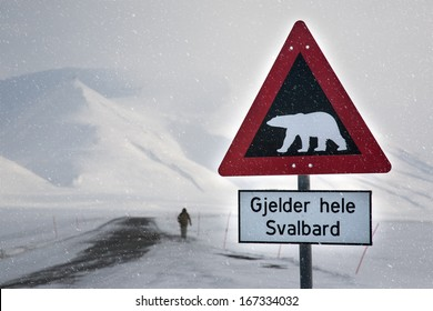 Attention,polar bear crossing! Arctic North Pole, Svalbard. In a background is male silhouette of a back side,unrecognizable