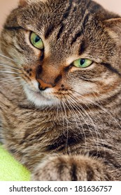 attentive look of a cat on green background