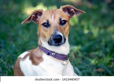 The attentive look of the female dog to its owner. Animal life. Pet Lover.