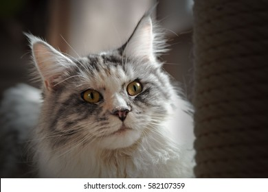 Attentively Looking Cat!