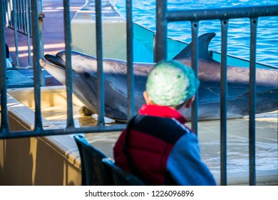Attica zoo park, Athens/ April, 2017: A boy watching a dolphin standing on the stage and doing his playful tricks through bars in a zoo. Wild animals in captivity