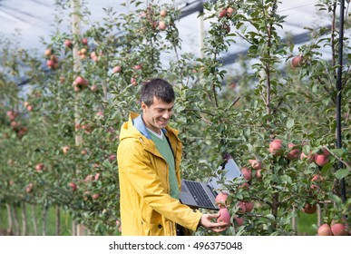 Attractive agronomist with laptop standing in apple orchard and checking fruit