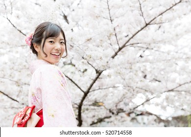 attractive asian woman wearing kimono looking cherry blossoms