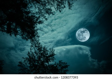 Attractive bright full moon on colorful sky above silhouettes of trees, outdoors at nighttime. Serenity nature background. The moon taken with my camera.