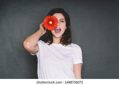 Attractive casual charming playful smiling brunette young woman in white t-shirt covering eye with red gerber daisy while standing over dark background