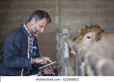 Attractive farmer in barn using digital tablet