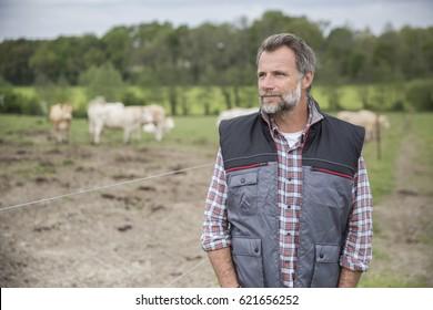 Attractive farmer in field of cattle