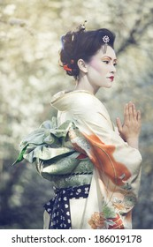 attractive geisha walking outdors against blossoming tree