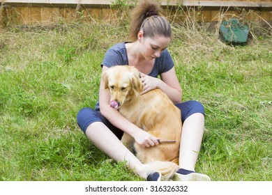 Attractive girl scratching retriever dog with comb outdoors