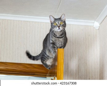 The attractive gray cat sits on the door and looks around from above