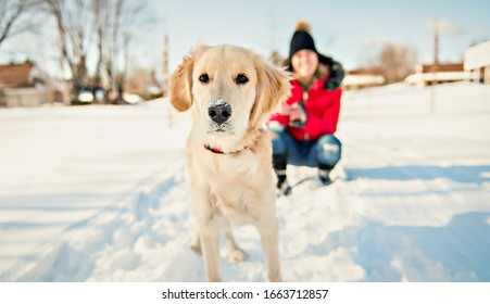 An Attractive mid adult blond woman in snow with Golden Retriever.