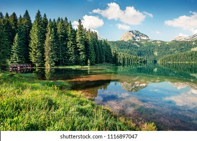 Attractive morning view of Black Lake ( Crno Jezero ). Beautiful summer scene of Durmitor Nacionalni Park, Zabljak location, Montenegro, Europe. Beauty of nature concept background.