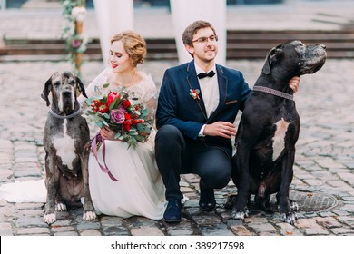 Attractive wedding couple sitting on their haunches on the pavement and holding two their purebred dogs