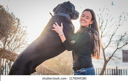 Attractive woman and her large dog jumping up on her. Great dane.
