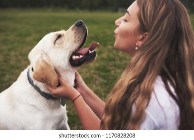Attractive young woman with dog outdoors. Gril on a green grass with labrador retriever.